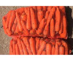 Морковь сорт Романс, Мирофлоринс - большой объем