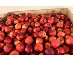 Продам яблука з холодильника різних сортів