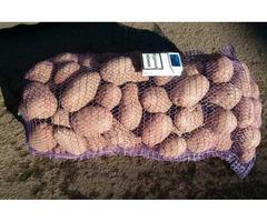 Продам картофель сортов Санте, Беллароса, Лабелла