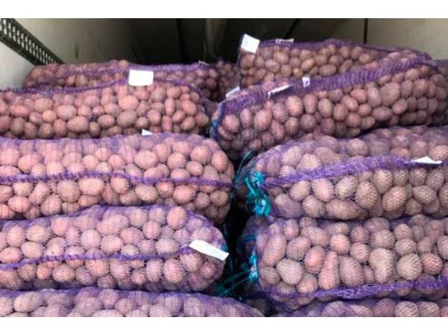 Продам посадочную и продовольственную картошку Бриз, Сантэ, Гала, Рэд Скарлет, Андрета