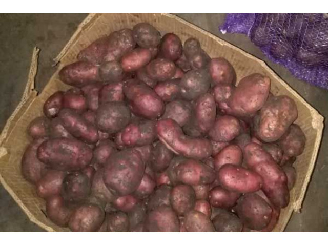 Продам качественный картофель. Сорта Гала, Эволюшен, Маргарита