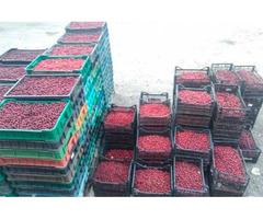 Продам вишни
