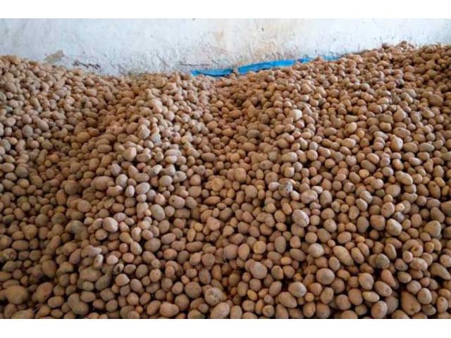 Продам картофель - урожай 2020