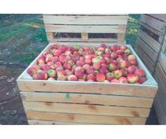 Продам яблука з саду врожаю 2020