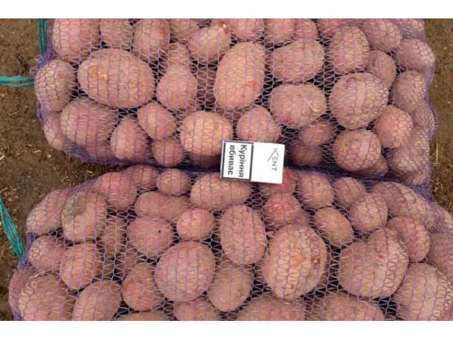 Продам картофель Рен Леди