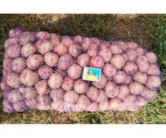 Продам посадочный картофель сорта Иван да Марья