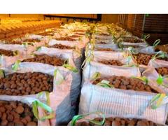 Продам картоплю різних сортів